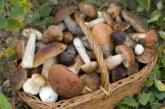 Servizio di controllo gratuito della commestibilità dei funghi.